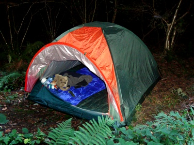 Hurrah! My home for the night. Bit bright, I am told.