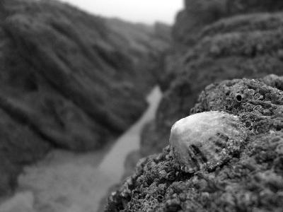 Crustation in The Pinnacles, East looe.